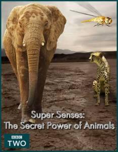 Уникальные способности животных (мини-сериал) / Super Senses: The Secret Power of Animals (2014 (1 сезон))